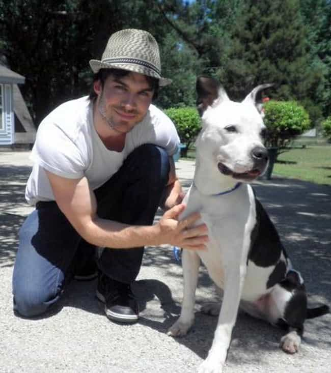 Ian Somerhalder is listed (or ranked) 4 on the list Inspirational Stories of Humans Who Advocate for Dogs