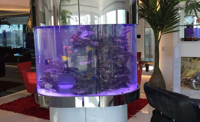 Ice-T is listed (or ranked) 4 on the list 29 Celebrities with Incredible Fish Tanks