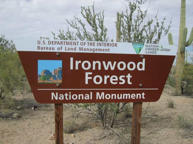 Ironwood Forest National Monum... is listed (or ranked) 3 on the list 26 National Monuments Trump Has On The Chopping Block