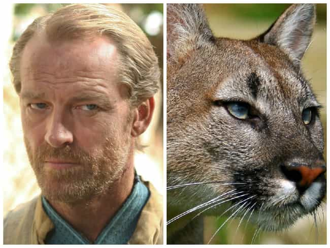 Jorah Mormont is listed (or ranked) 2 on the list Game of Thrones Characters and Their Animal Counterparts