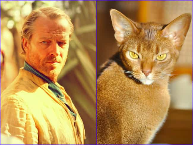 Jorah Mormont is listed (or ranked) 3 on the list 20 Cats Who Look Like GoT Characters
