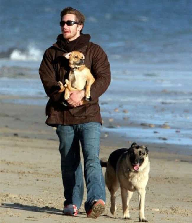 Jake Gyllenhaal is listed (or ranked) 2 on the list The Best Photos of Celebrities Walking Their Dogs