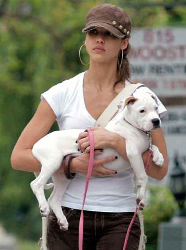 Jessica Alba is listed (or ranked) 1 on the list 28 Celebrities Who Adopted Pit Bulls