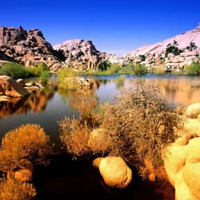 Joshua Tree National Park is listed (or ranked) 25 on the list The Best National Parks in the USA