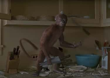 The Monkeys In 'Jumanji'
