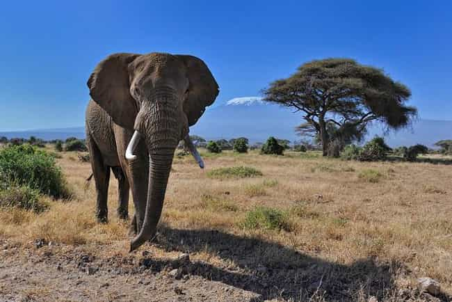 Kenya is listed (or ranked) 1 on the list The Best Countries for Safari Trips