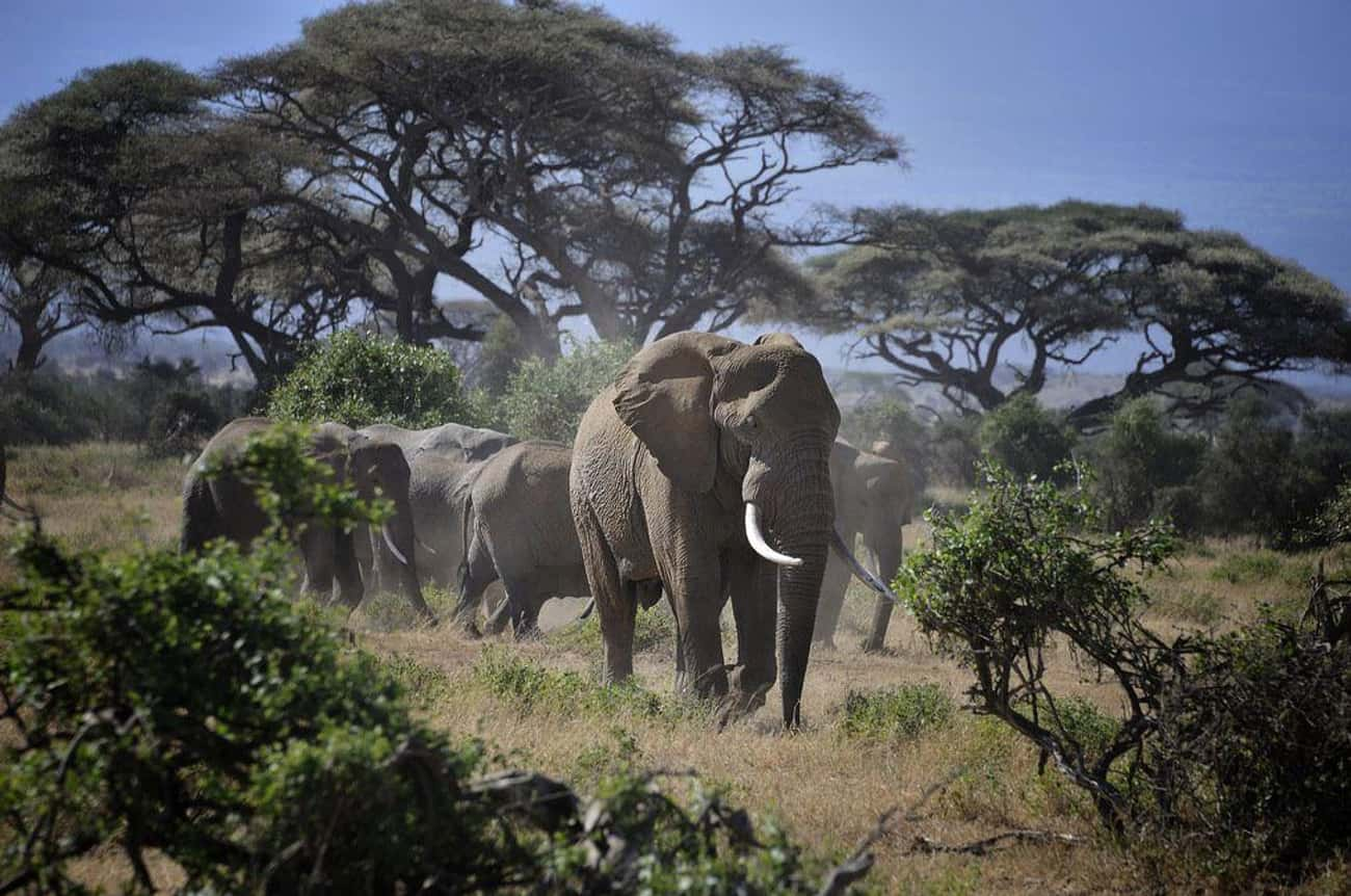 Kenya is listed (or ranked) 4 on the list The Best African Countries to Visit