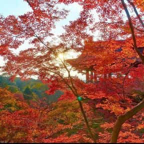 Kyoto is listed (or ranked) 7 on the list Best Couples Vacation Destinations & Anniversary Trips