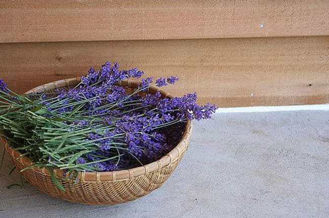 Lavender is listed (or ranked) 1 on the list House Plants To Change Your Moods