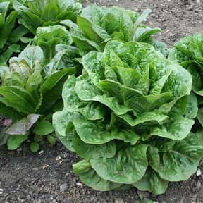 Lettuce is listed (or ranked) 5 on the list The Best Garden Vegetables to Eat