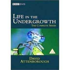 Life in the Undergrowth is listed (or ranked) 19 on the list The Best Documentary Miniseries
