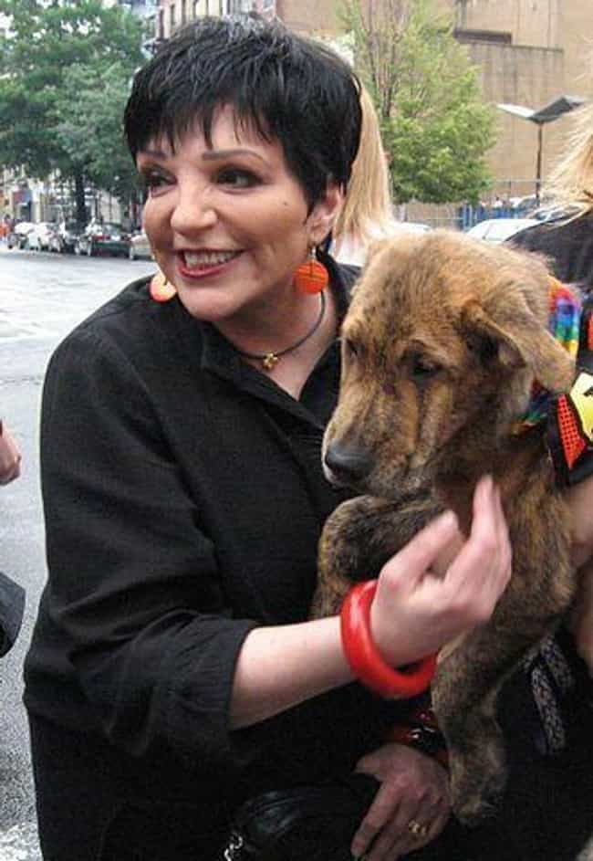 Liza Minnelli is listed (or ranked) 7 on the list 15 Celebrities Who Went to Silver Hill Hospital Rehab