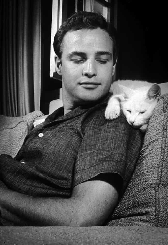 Marlon Brando is listed (or ranked) 6 on the list Cool Old Photos of Celebrities with Their Cats