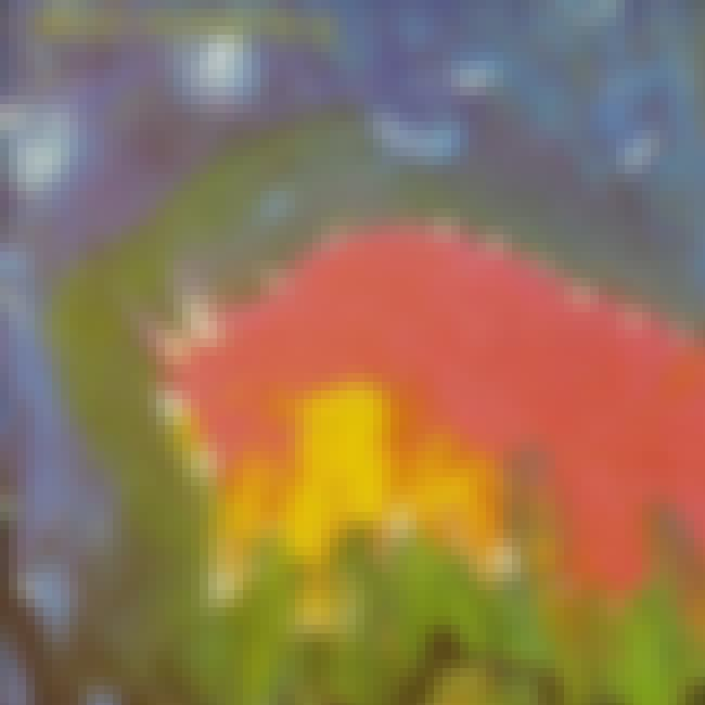 Meat Puppets II is listed (or ranked) 1 on the list The Best Meat Puppets Albums of All Time