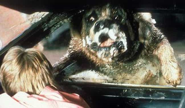 Cujo is listed (or ranked) 3 on the list The Best Jump Scares In Stephen King Movies