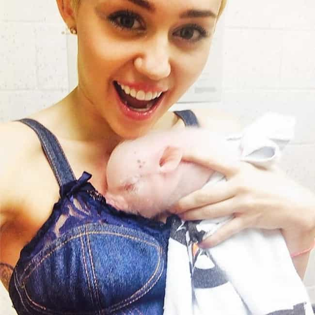 Miley Cyrus is listed (or ranked) 1 on the list 15 Celebrities Who Have Pet Pigs