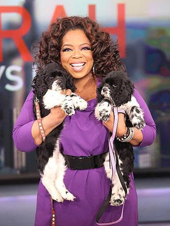 Oprah Winfrey is listed (or ranked) 5 on the list 26 Celebrities Who Have a Ton of Pets