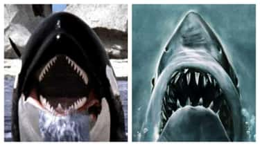'Orca' Tried To Substitute The Killer Shark In 'Jaws' For A Whale