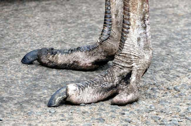 Ostrich is listed (or ranked) 3 on the list Weird Animal Feet You Have To See To Believe