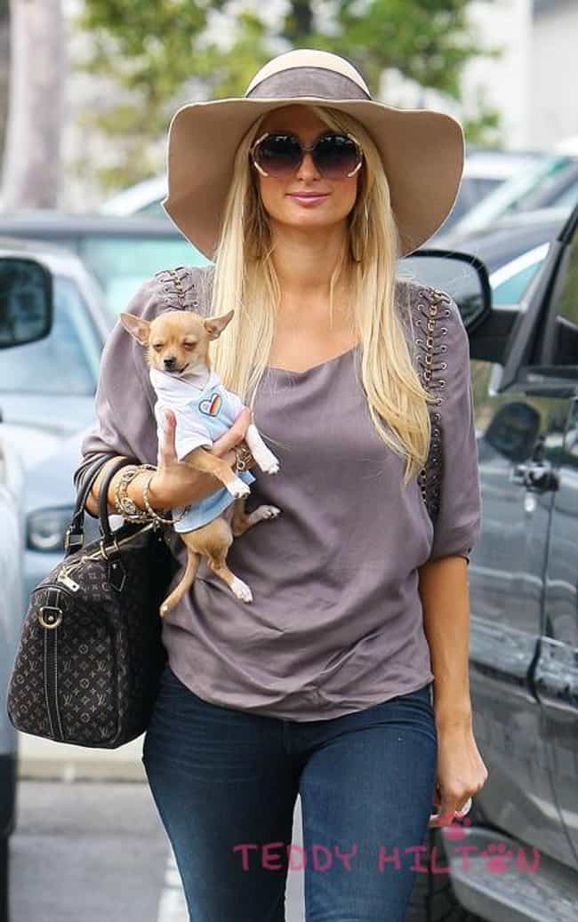 Paris Hilton is listed (or ranked) 3 on the list 25 Celebrities Who Have Chihuahuas