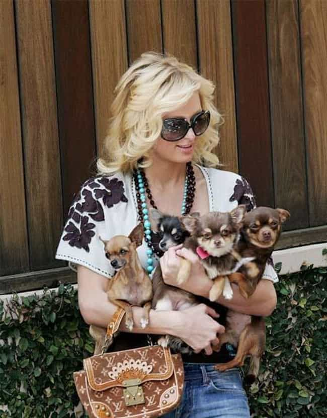 Paris Hilton is listed (or ranked) 1 on the list 26 Celebrities Who Have a Ton of Pets