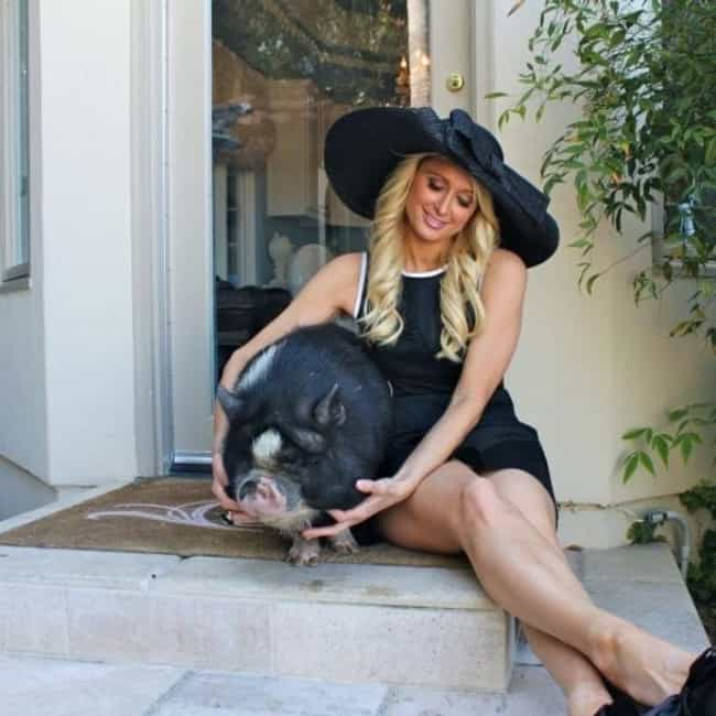 Paris Hilton is listed (or ranked) 3 on the list 15 Celebrities Who Have Pet Pigs