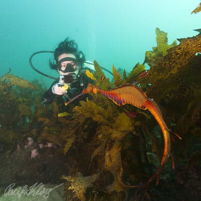 Philippines is listed (or ranked) 2 on the list The Best Scuba Destinations In The World