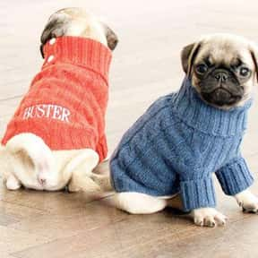 Ralph Lauren is listed (or ranked) 17 on the list The Best Pet Clothing Brands