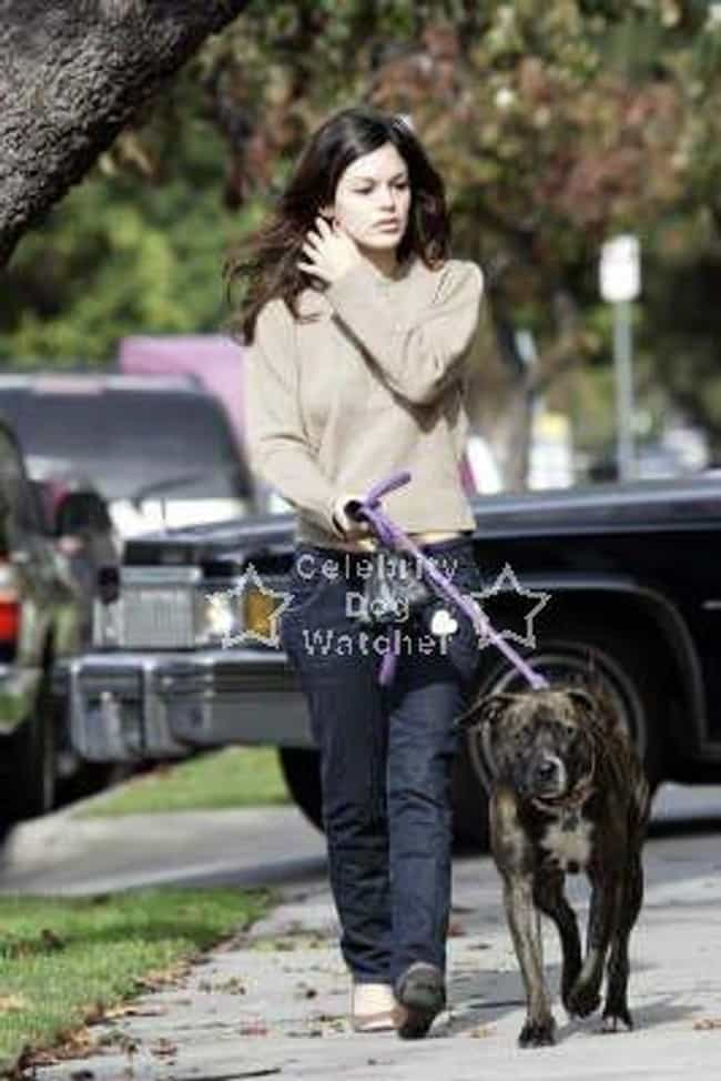 Rachel Bilson is listed (or ranked) 4 on the list 28 Celebrities Who Adopted Pit Bulls