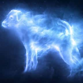 Ronald Weasley - Jack Russell  is listed (or ranked) 14 on the list EveryPatronus In'Harry Potter,' Ranked By How Much You Wish It Was Yours