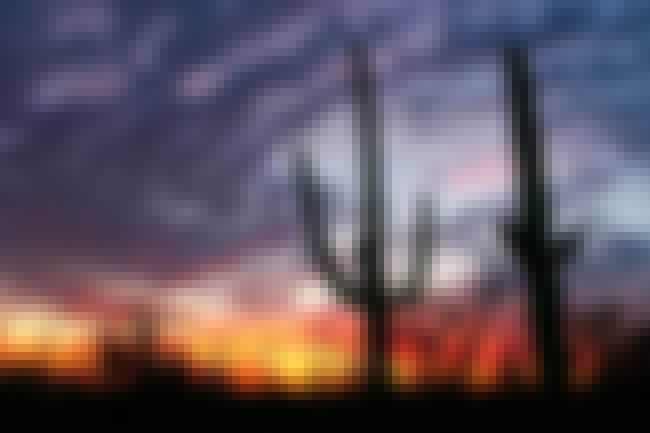 Saguaro National Park is listed (or ranked) 48 on the list The Best National Parks in the USA