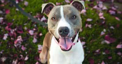 Best Dog Breeds List Of Favorite Dog Breeds For Pet Owners